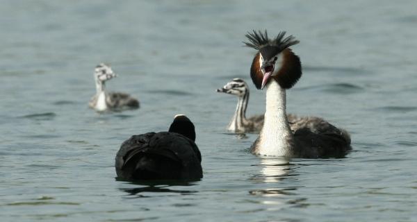 parade nuptiale des oiseaux